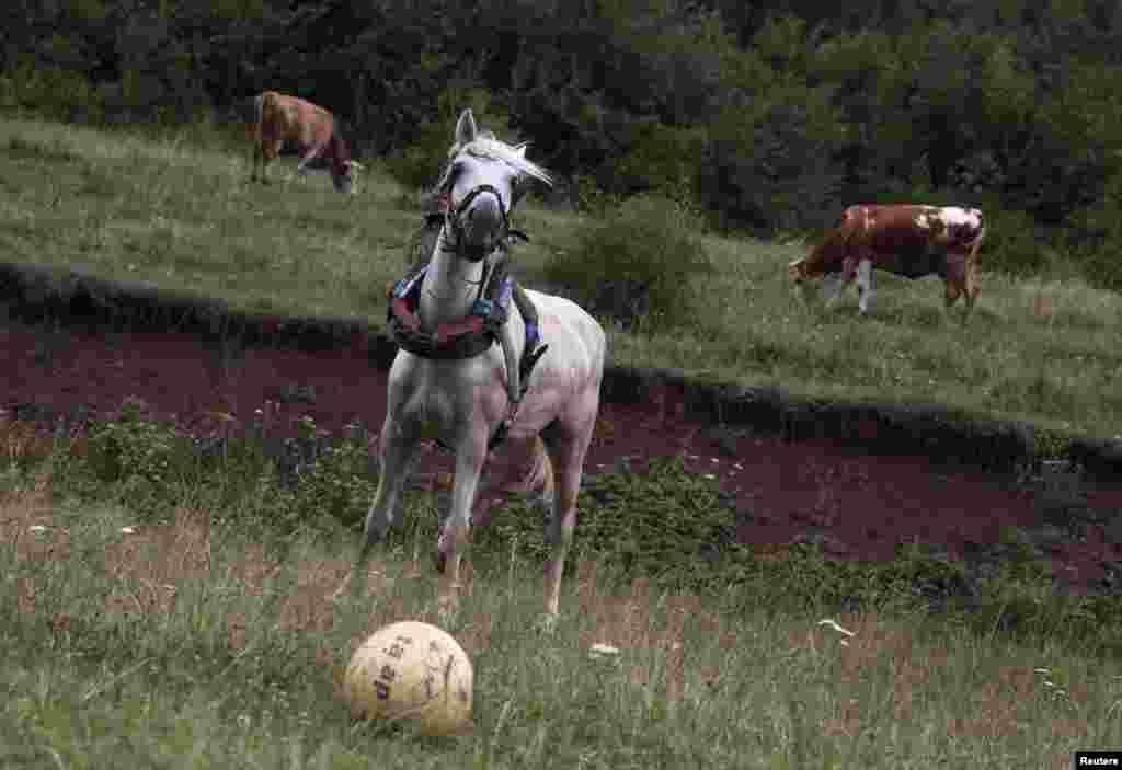 اسبی در حال بازی با یک توپ در زمین فوتبالی در دهکده ای در کوزوو