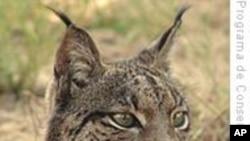 IUCN:地中海六分之一哺乳动物面临灭绝