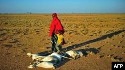 Umukenyezi n'umwana wiwe hafi y'impene zishwe n'uruzuba hafi y' Dhahar mu ntara ya Puntland, mu buraruko bwa Somaliya.