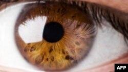 ¿Qué tan rápido es el ojo humano comparado con el de los insectos?
