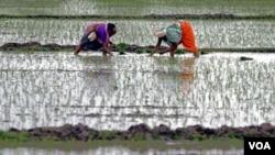 Para petani di Gujarat, India (foto: dok). Peradaban India mengalami perubahan sesuai dengan perubahan Iklim.