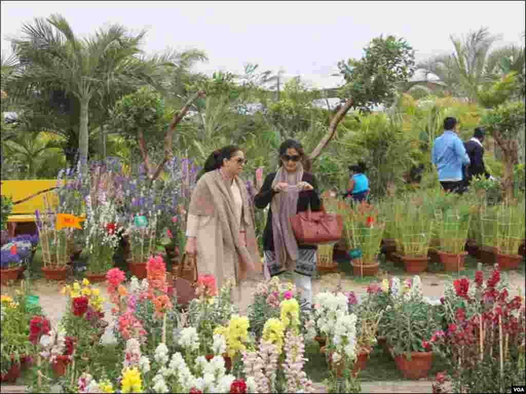 نمائش میں مختلف اقسام اور رنگوں کے پھول موجود تھے