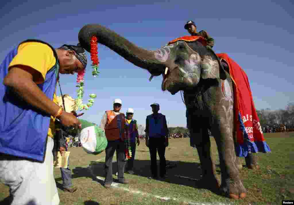 نیپال میں ہاتھی کھیل کے میدان میں