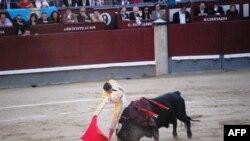 Los Torros (2)