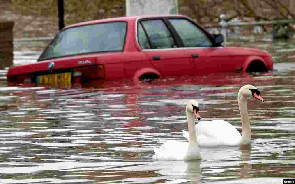 Swans swim past a car submerged under flood water on a residential street in Richmond, west London, Britain.