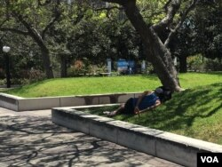 A homeless person rests in the grass in downtown Los Angeles in June 2017. The number of homeless people in Los Angeles county has risen by 23 percent, to nearly 58,000. (E. Lee/VOA)