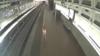 У столиці США дикий олень пробрався на станцію метро поблизу Пентагону