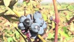 Georgia Looks Toward End of Russia's Wine Embargo