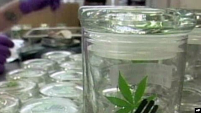 Containers of medical marijuana at the Harborside Health Center