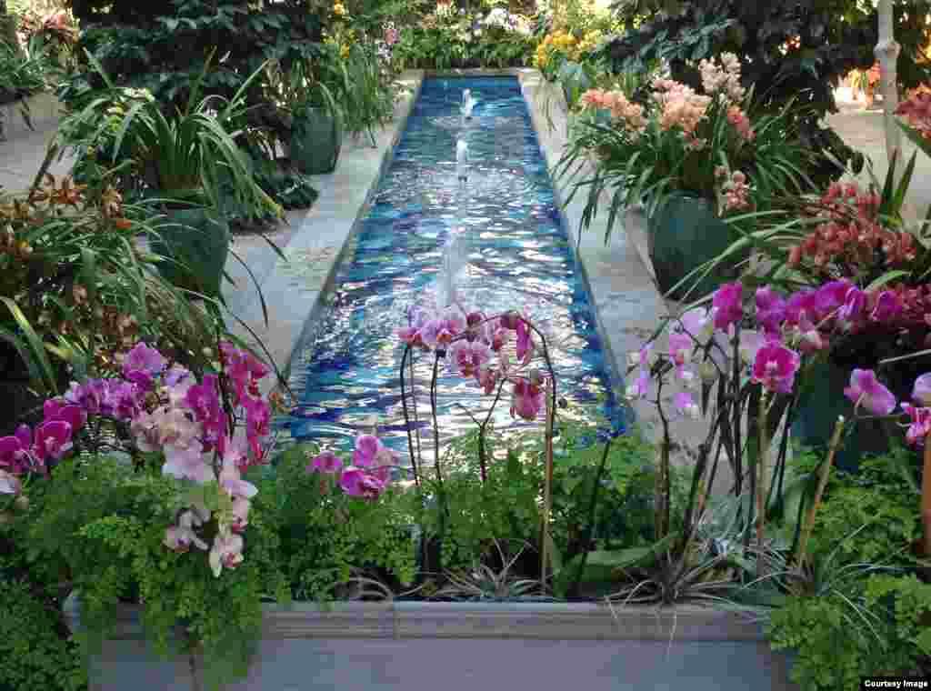 ផ្កាអូគីដេត្រូវបានដាក់បង្ហាញនៅសួនផ្កា Botanic Garden នៅរដ្ឋធានីវ៉ាស៊ីនតោន ឌីស៊ី សហរដ្ឋអាមេរិក។