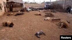 Bangkai hewan berserakan di tanah di wilayah Khan al-Assal, Suriah, akibat serangan yang menurut warga setempat dikatakan menggunakan senjata kimia 23 Maret yang lalu (Foto: dok).