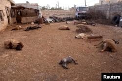 2013年3月23日,在叙利亚北部的阿萨尔镇,地上满是动物的尸体,叙反对派说是被几天前政府军发起的化武攻击毒死的。