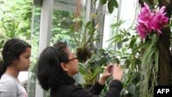 Džozefina Mateo fotografiše orhideje u Američkoj botaničkoj bašti.