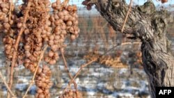 Vera e prodhuar nga rrushi i ngrirë, një pije e veçantë kanadeze