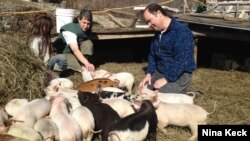 Kickstarter users Walter and Holly Jeffries with some of the 300 pigs they're raising in West Topsham, Vermont