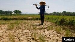 Tình trạng hạn hán đang tác động tiêu cực lên nông nghiệp, lâm nghiệp và ngư nghiệp Việt Nam.