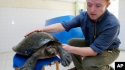 "Wildlife Conservation Society Field Veterinarian Martin Gilbert, from Britain, shows ""the lucky royal turtle,"" a rare and endangered terrapin that likely was headed for a Chinese soup pot but saved by keen-eyed wildlife officers and a tiny microchip, at h"