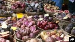 Dešifriran genom treće svjetske poljoprivredne kulture - krumpira