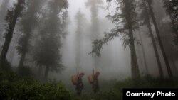 Diện tích rừng tự nhiên khu vực Tây Nguyên giảm sút phần lớn vì nạn phá rừng để canh tác, sản xuất nông nghiệp và trồng cây công nghiệp.