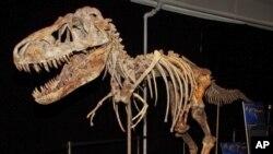 Cкелет тираннозавра