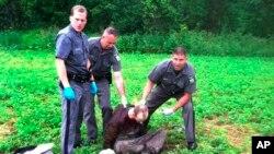 28일 경찰이 미국 뉴욕주 콘스터블에서 탈옥한 수감자 데이비드 스웨트를 체포하고 있다.