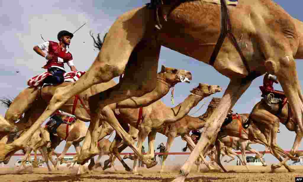 د متحده عربي اماراتو په ابو ظبي ښار کې د اوښانو د ځغلولو د کلتوري جشن یو انځور.