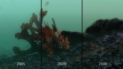 Video Simulation in the Baltic Sea