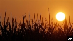 7月4日太陽照在伊利諾伊州的一個平原上。乾旱和破紀錄的熱浪使玉米作物的生長受到破壞。