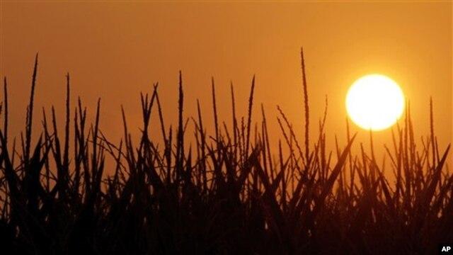 Tình trạng tăng nhiệt toàn cầu sẽ làm cho những đợt nắng nóng xảy ra thường xuyên hơn