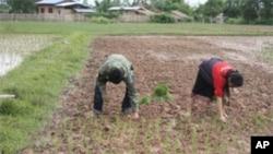 Japão entrega arroz a Moçambique