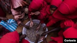 Faayilii - Barattoota Somaaliyaa qarqaarsa nyaataa WFP'n keennu argatan