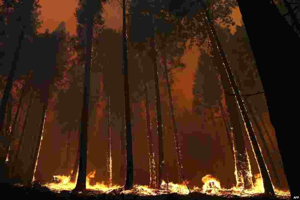 Šuma u požaru duž jednog autoputa u Kaliforniji.