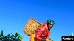 Agricultora, Quénia (foto de arquivo)