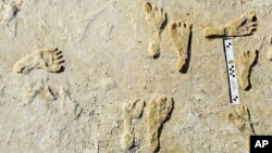 This undated photo made available by the National Park Service in September 2021 shows fossilized human fossilized footprints at the White Sands National Park in New Mexico. According to a report published in the journal Science on Sept. 23, 2021. (NPS via AP)