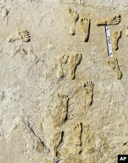 This undated photo made available by the National Park Service in September 2021 shows fossilized human fossilized footprints at the White Sands National Park in New Mexico. According to a report published in the journal Science on Thursday, Sept. 23, 202