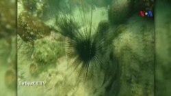 Đảo nhân tạo của TQ ở Biển Đông gây tác hại môi trường
