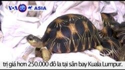 Thu giữ rùa nhập lậu ở Malaysia trị giá hơn 250.000 đô la