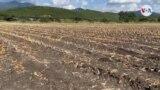 Nueve millones de centroamericanos sufren de inseguridad alimentaria