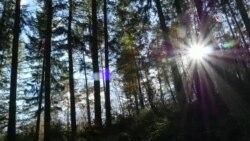 Árboles que hablan de Cambio Climático