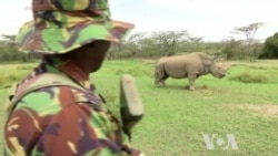 Technology Helps Save Endangered Species in Africa