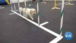 Dogs Hit the Canine Gym for Exercise