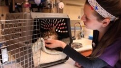 Células madre contra enfermedades bucales en gatos