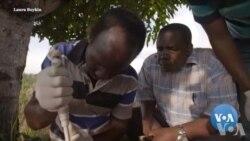 DNA Helps Identify Crop Diseases in Africa