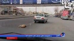 عکسهای سگی که با یک ماشین در جاده مشهد-شاندیز کشیده می شود