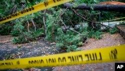 Oboreno stablo u Dekaturu, predgrađu Atlante, Džordžija, nakon prolaska uragana Zeta, 29. oktobra 2020.