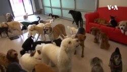 รีสอร์ทสุดหรูสำหรับ 'น้องหมา' เอาใจคนรักสัตว์ในอเมริกา