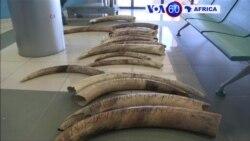 Manchetes Africanas 1 Julho: Angola quer reforça fronteiras contra caça furtiva