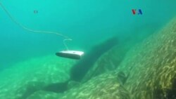 Tridente, submarino celular