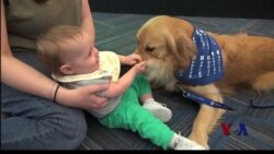 繁忙机场人狗亲近帮助减压