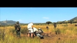 偷猎激增 国际社会呼吁禁止象牙买卖